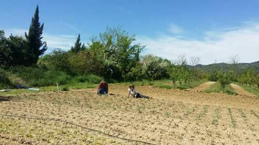 Working on a farm in Italy