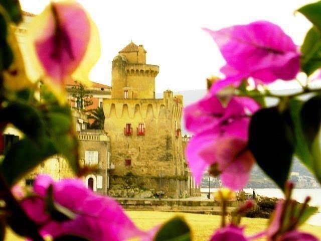 Bouganvillea in Italy