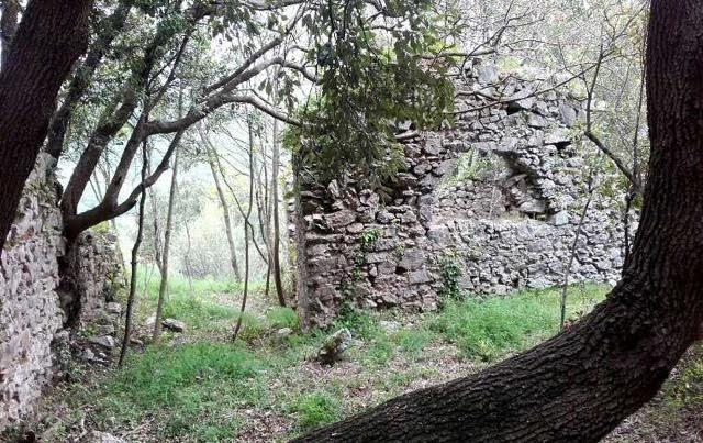 Abandoned castle in the forest