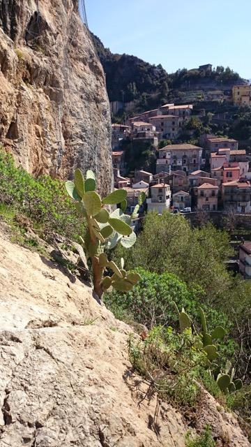 Cactus Calabria
