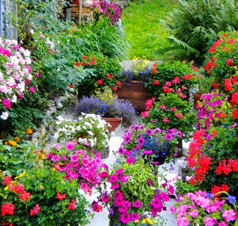 Candelo Flower Show