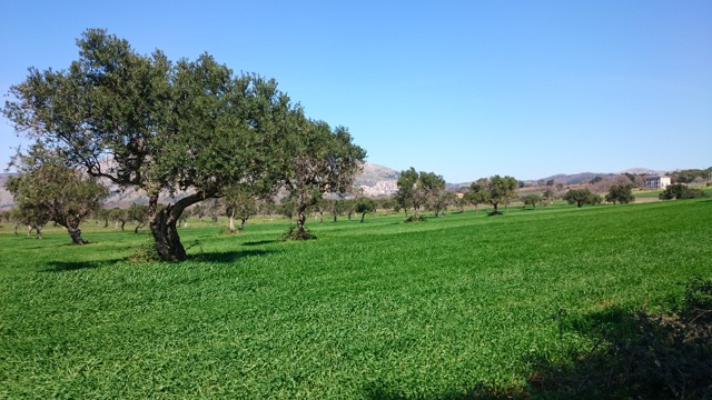 Santa Domenica Talao Countryside