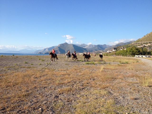 Horses in Calabria