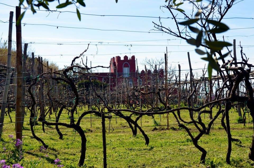 Vineyards of La Vigna