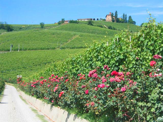 Piedmont Langhe hills near Barolo