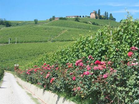 Barolo Langhe Piemonte