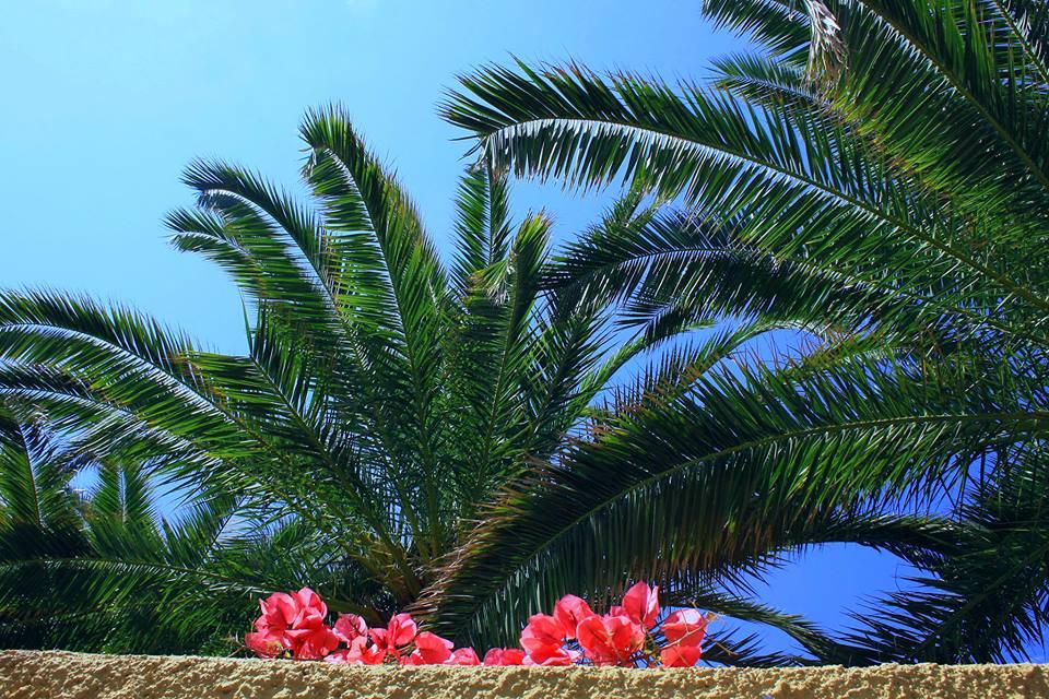 Palms on the Italian Riviera