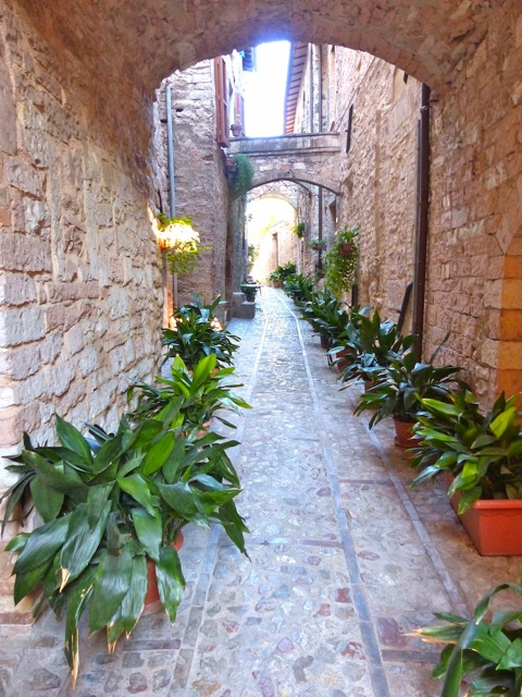 Our Lane in Spello
