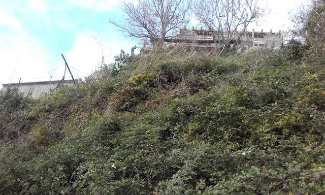 View of garden- Calabria
