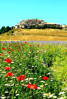 Fields of Poppies Marche Italy