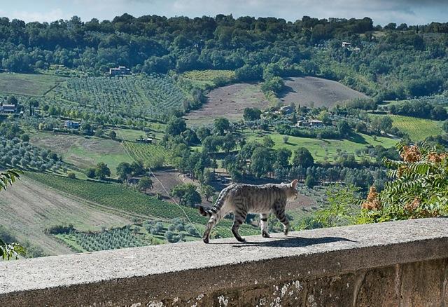 Italian cats by Susan Papazian