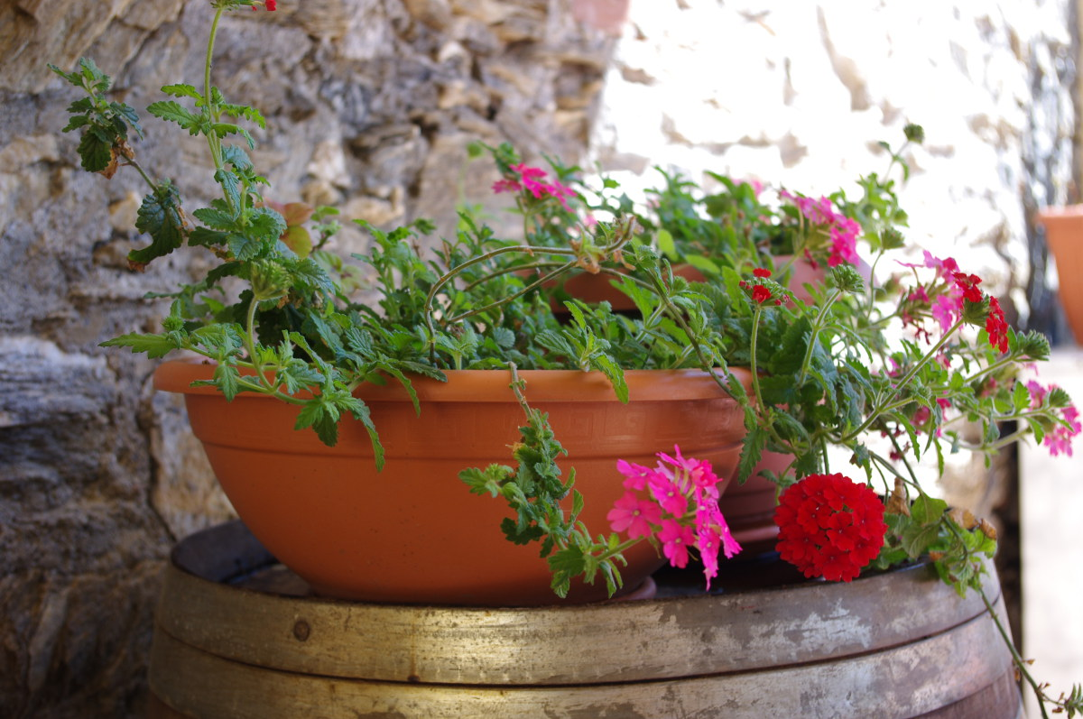 Flower box in Italy
