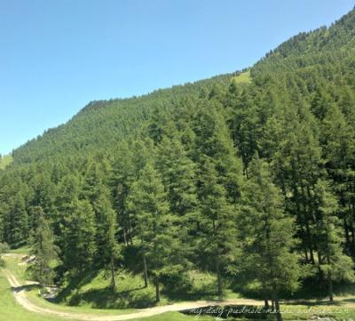 Piedmont hiking trails